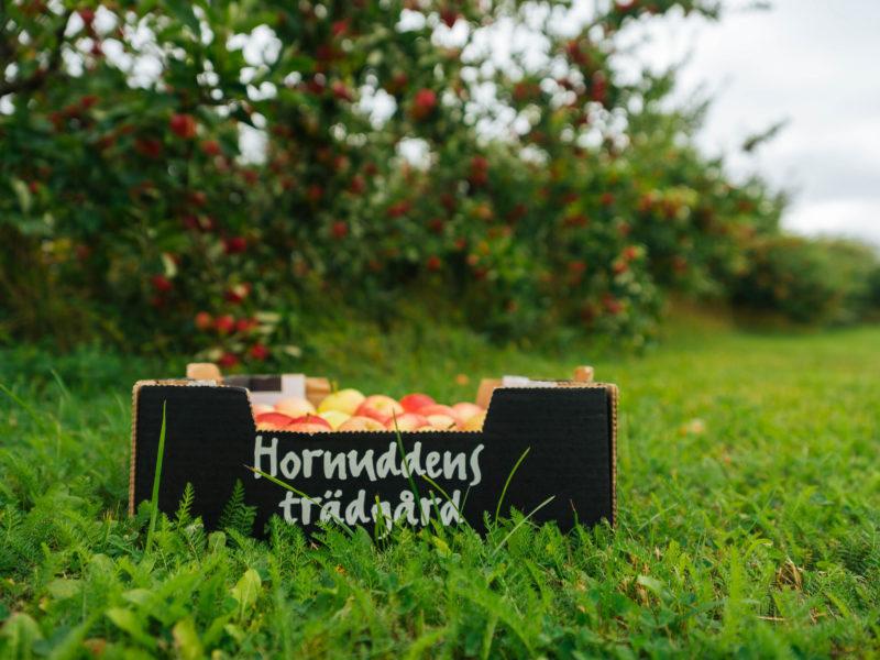 Dags att beskära äppelträden … Eller inte?