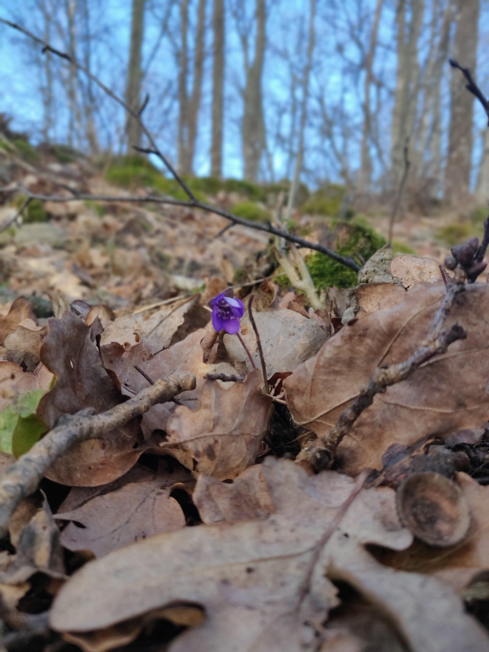 Februari 2020 – är våren här?