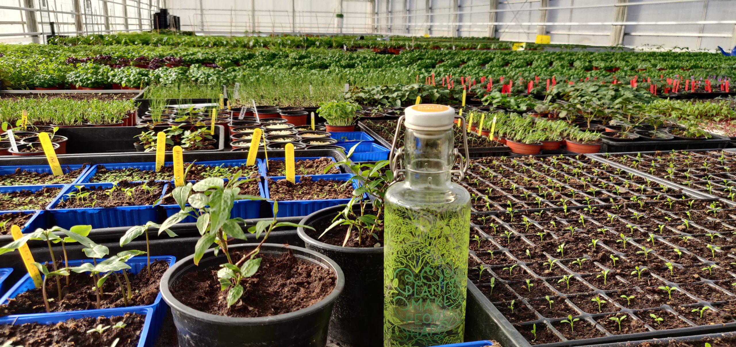 Vårgrönt i växthusen