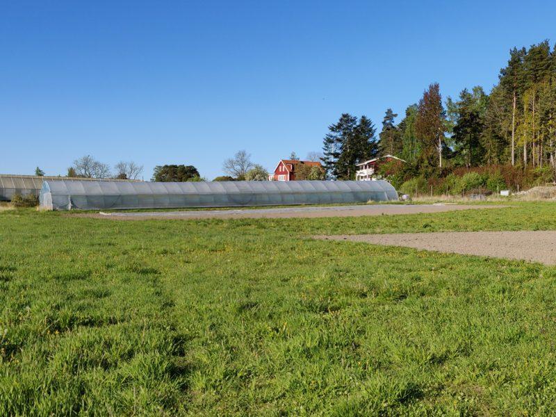 Äpplen på Hornudden – historia och framtid